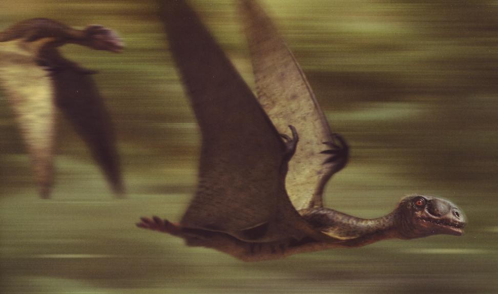 Anurognathus