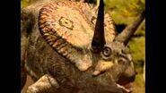 Torosaurus lock horns. Torosaurus bloqueo de cuernos.