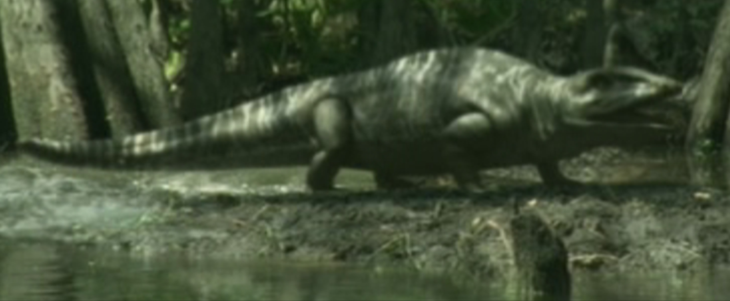 Anthracosauria