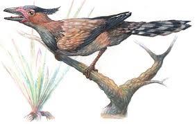 Sinornis
