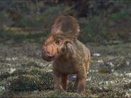 Movie BabyPachyrhinosaurus