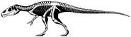 800px-Eustreptospondylus oxoniensis skeleton