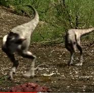 Twins Tyrannosaurus Chicks 00