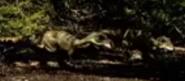 Tale Tyrannosaurus Chicks