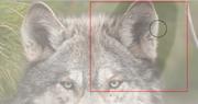 Tutorial fur ear phase.png