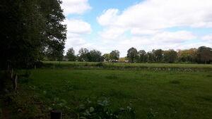 Koeien Duivelshof