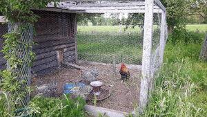 Kippen Duivelshof