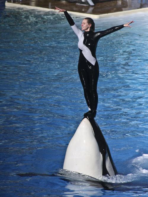Dawn Brancheau's SeaWorld Training Suit