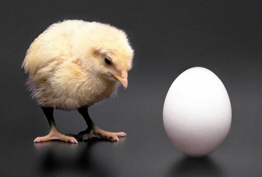 Shifting Chicken Egg