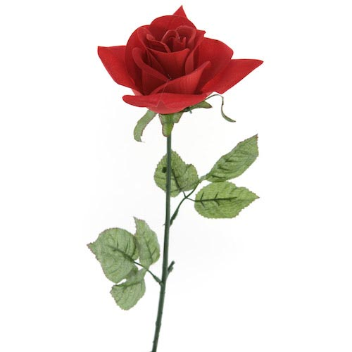 Beauty And The Beast's Rose