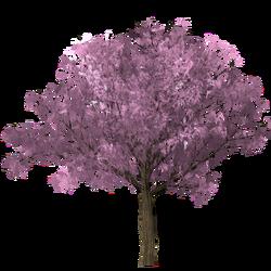 Plum tree.png