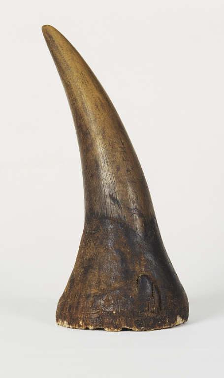 Albrecht Dürer's Rhinoceros Horn