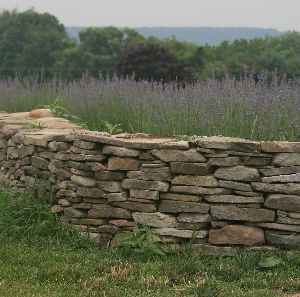 Robert Frost's Stone Wall
