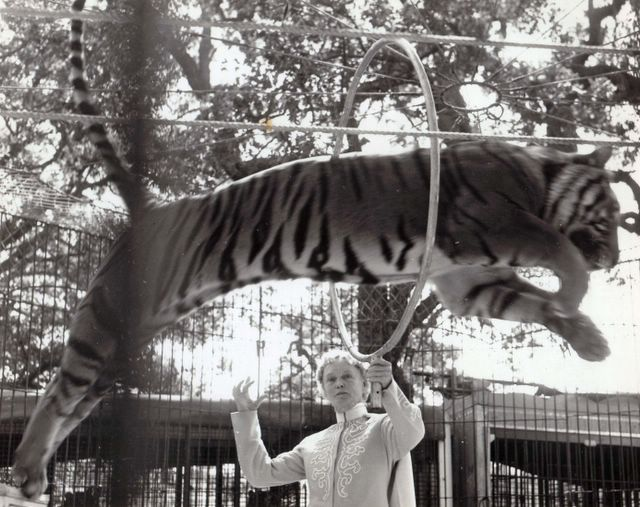 Mabel Stark's Tiger Hoop
