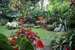 Tropical garden.jpg