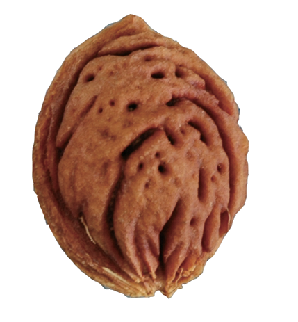 Momotarō's Peach Pit