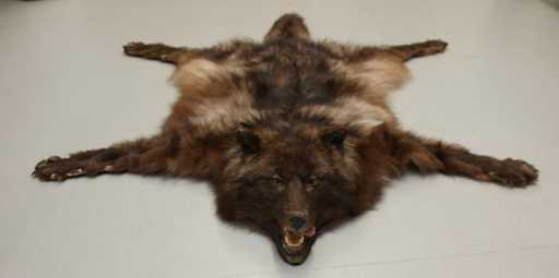 Peter Stumpp's Wolf Skin