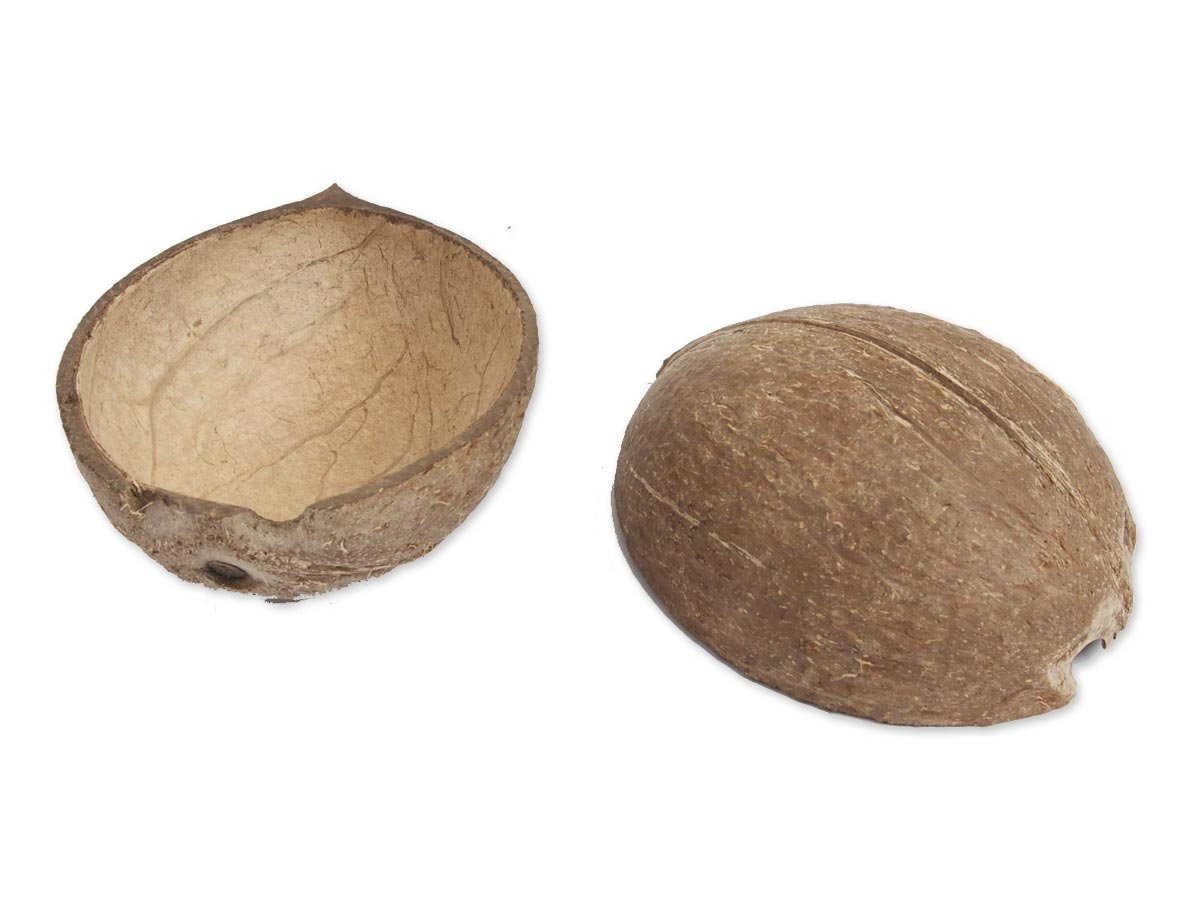 Coconut Shells from Monty Python and the Holy Grail