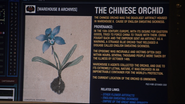The Chinese Orchid Article