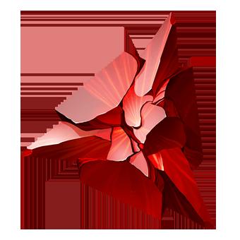 Кримциан-Звезда
