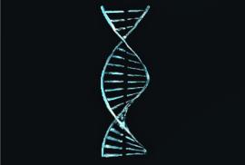 Kavat Genetic Code.png