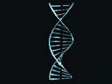 Genetischer Code: Kavat
