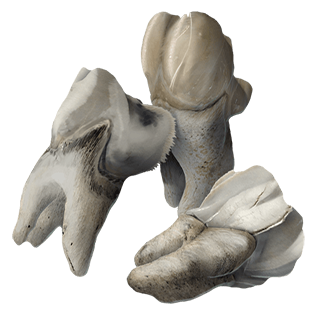 Зубы Шарраки