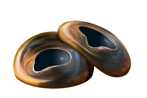 Oczy Traloka