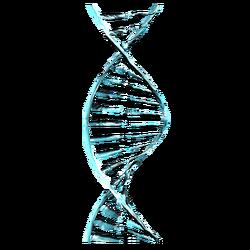 Генетический Код Каватов вики.png