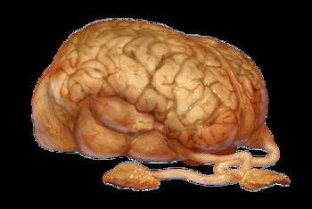 Cérebro de Norg