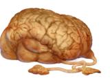 Mózg Norga