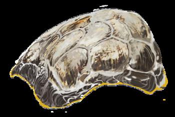 Casca de Besouro Seram