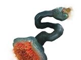 Parasitic Tethermaw