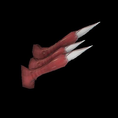 Pazur Grzbietowy Kuaki