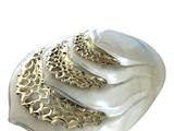 Tubercular Gill System