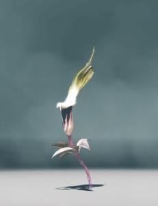 Dusklight Sarracenia