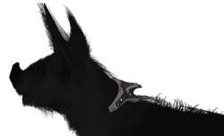 KubrowCollar.png