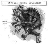 Xenos-specimen