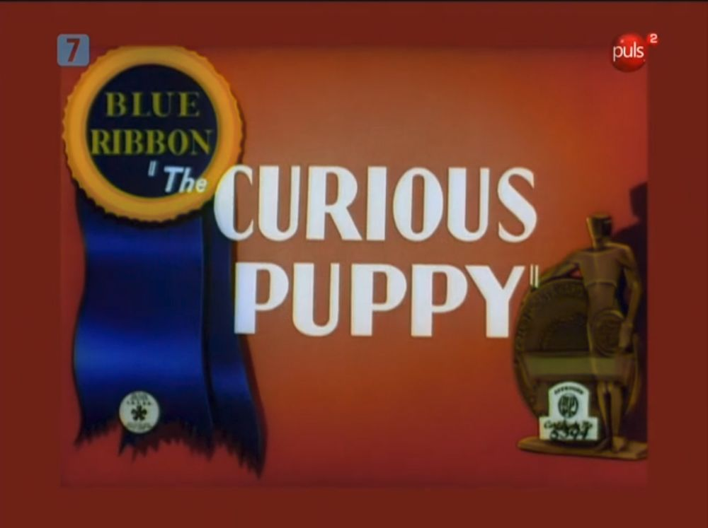 The Curious Puppy