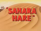 Sahara Hare