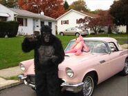 Gorilla-You're-A-Desperado