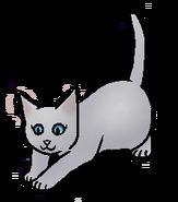 Wilgvacht.kitten