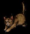 Tijgerster.kitten