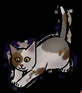 Schildpadkit.kitten