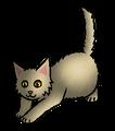 Besneus.kitten