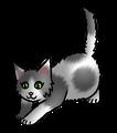 Hazelstaart.kitten
