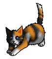 Roosrijp.kitten
