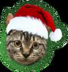 Deze Gebruiker heeft de Kerstkat geholpen met cadeautjes brengen.