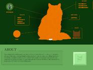 Squirrelflight Website