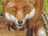 Fuchs (Tier)